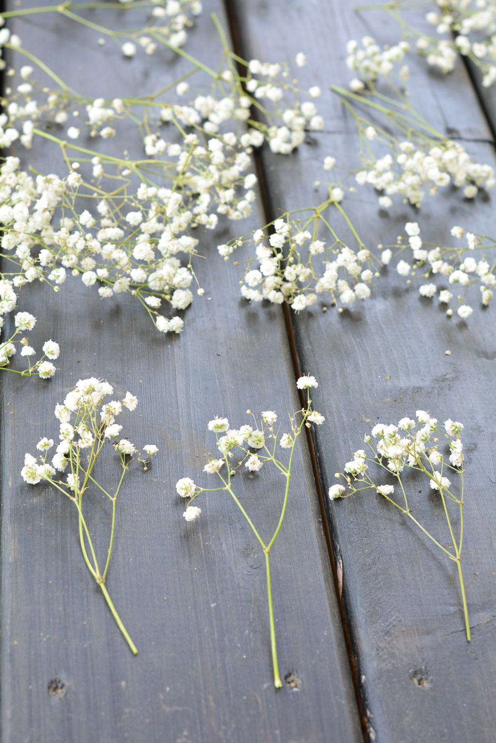 trimmed baby breath flowers