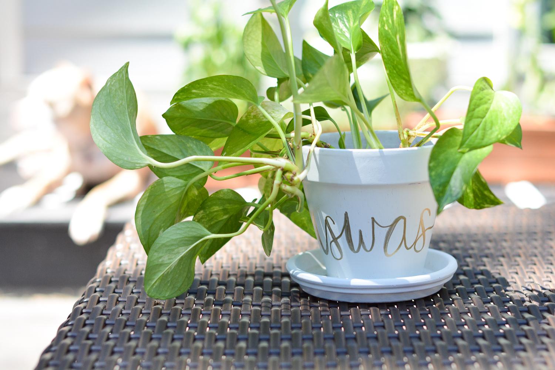final DIY Terra Cotta Pots with a name!