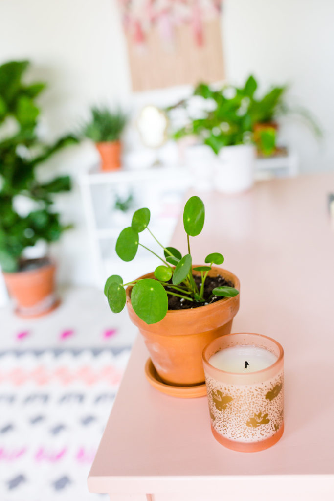 chinese money plant are a great pet friendly plant