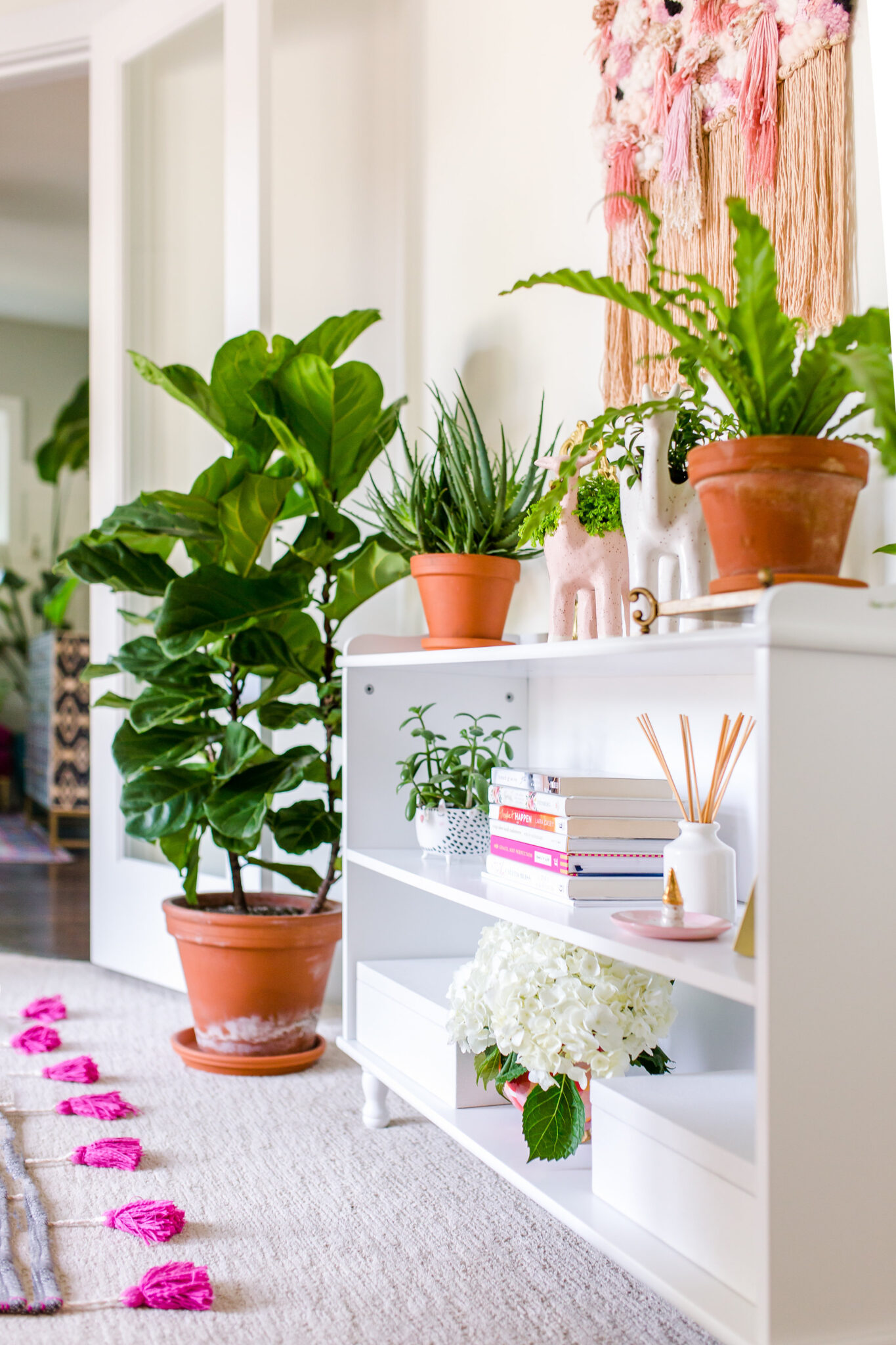 bloomscape plants fiddle leaf fig in home office on white shelves
