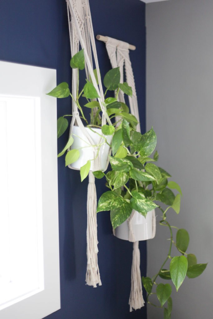 Pothos are a great low light indoor plant as demonstrated by these 2 hanging on a wall.