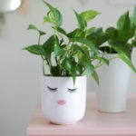 Pothos Plant Care - How to Grow + Propagate {VIDEO!}