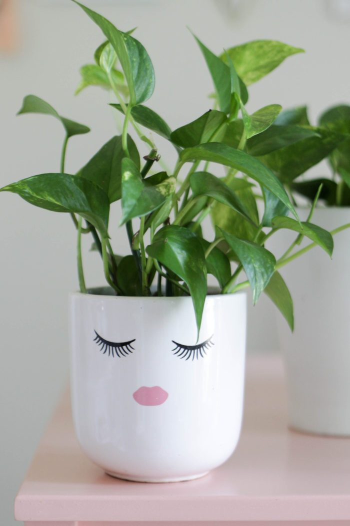 Pothos Plant Care – How to Grow + Propagate {VIDEO!}