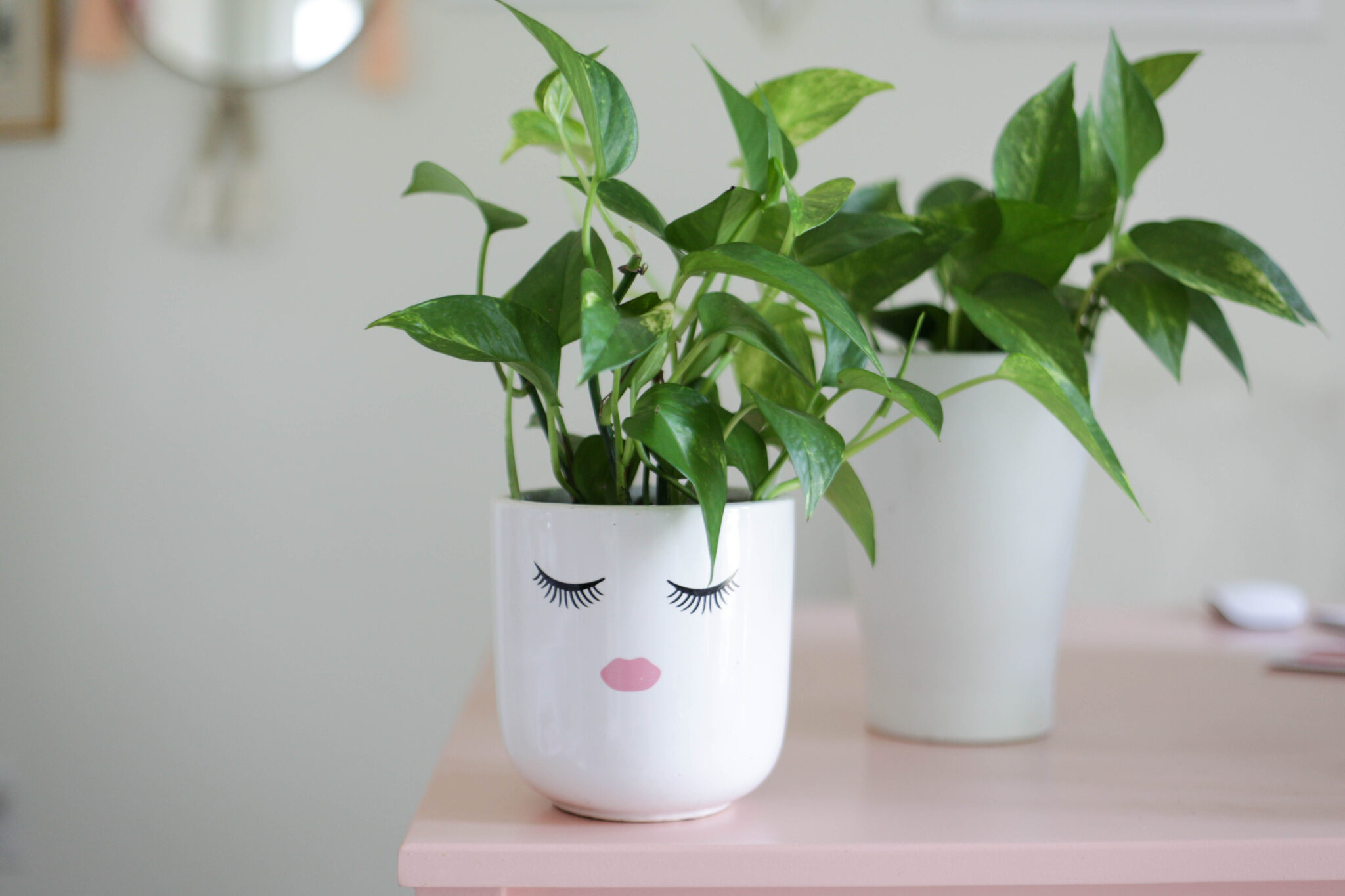 pothos plant in face pot with eyelashes