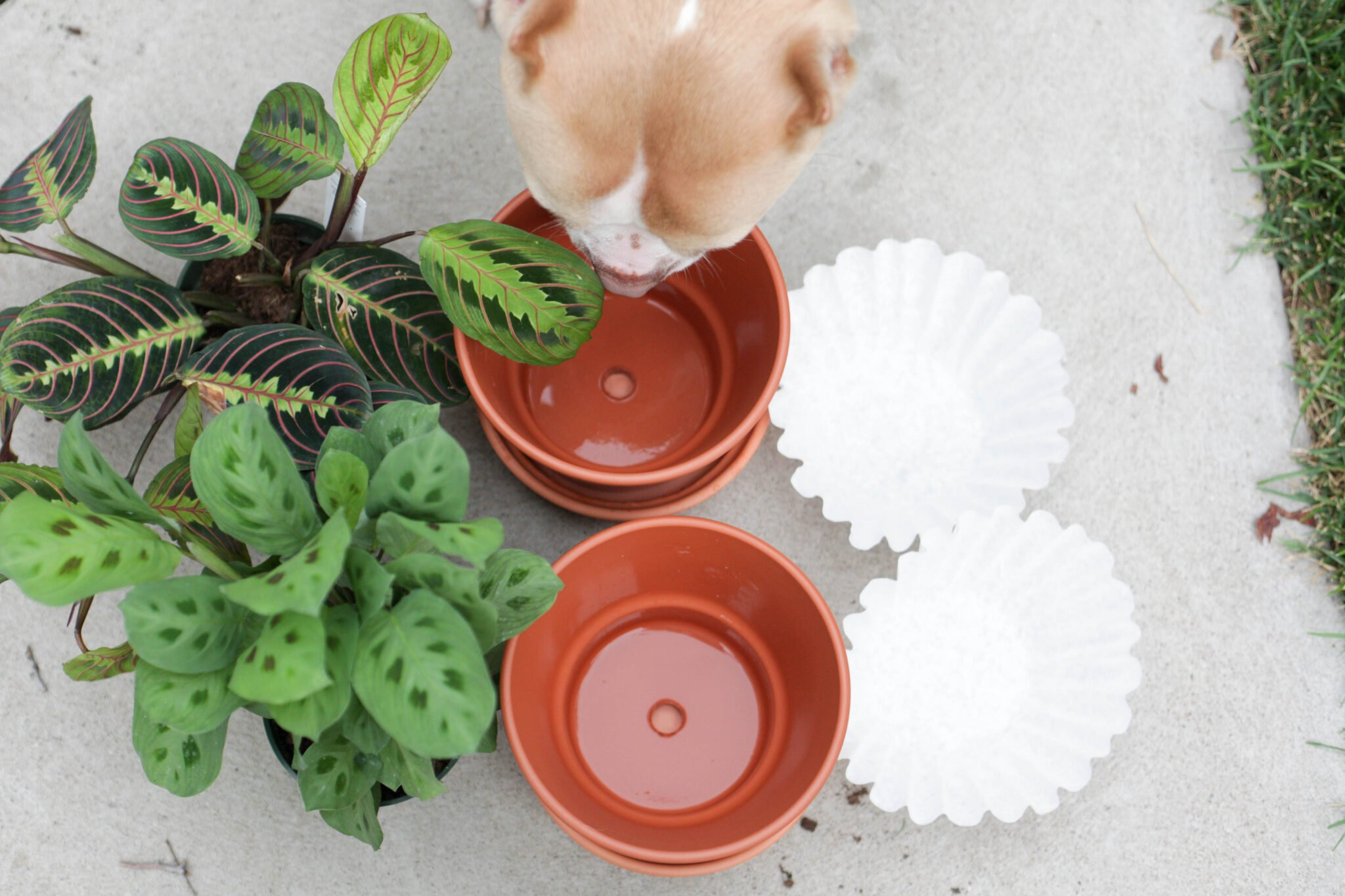 use a coffee filter in the bottom of your terracotta pot (1 of 8)