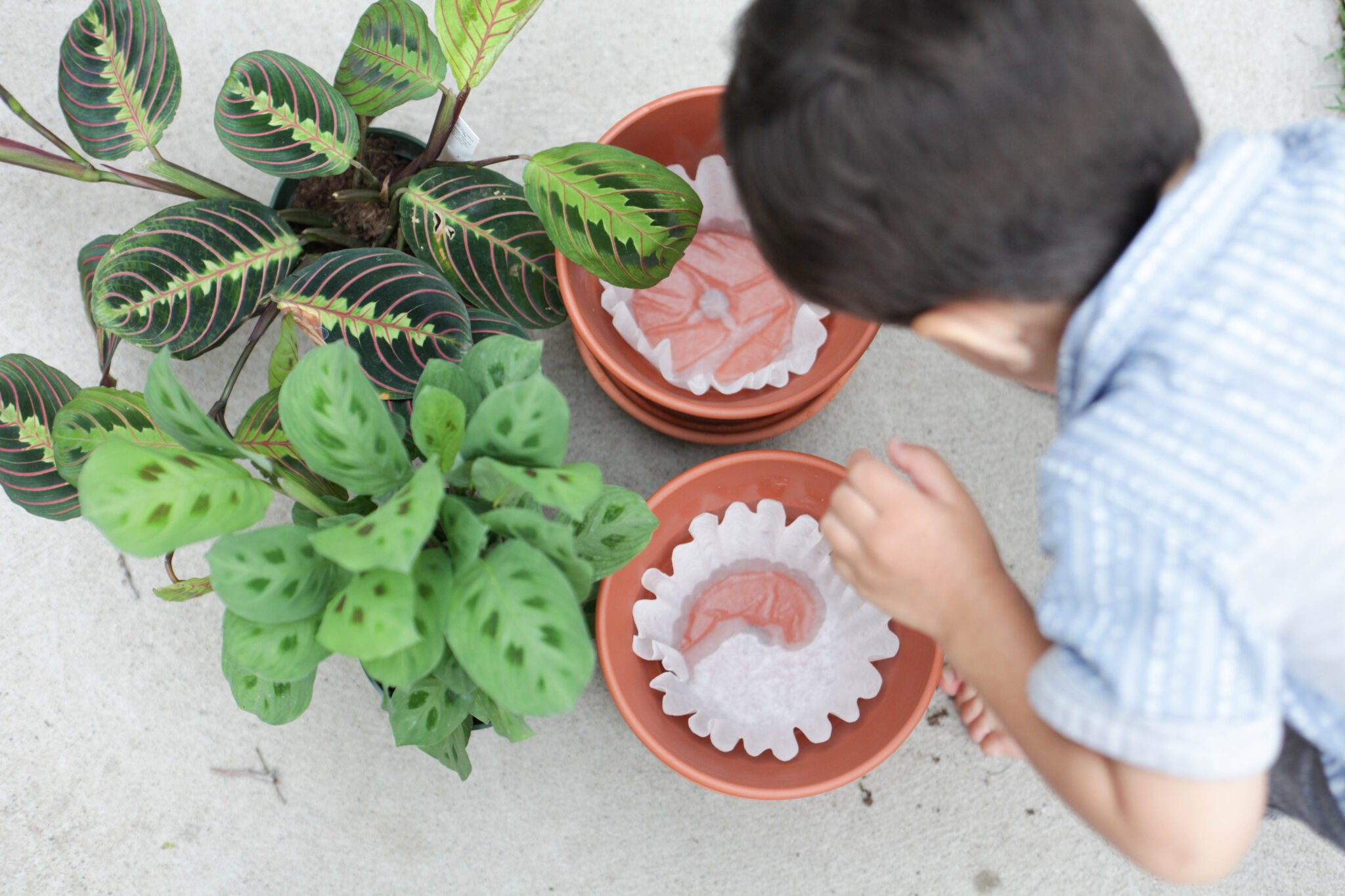 use a coffee filter in the bottom of your terracotta pot (2 of 8)