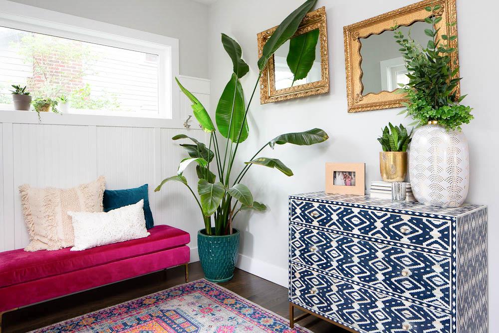 large indoor plant - bird of paradise