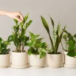 20 Perfect Gifts for Plant Lovers 2019