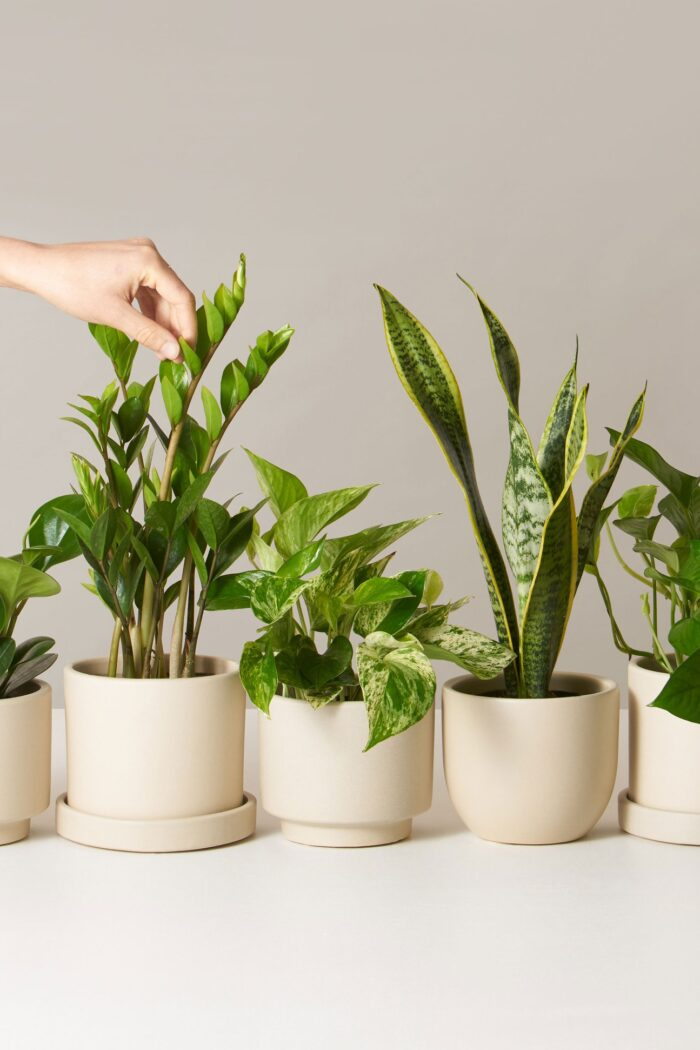 20 Perfect Gifts for Plant Lovers 2020