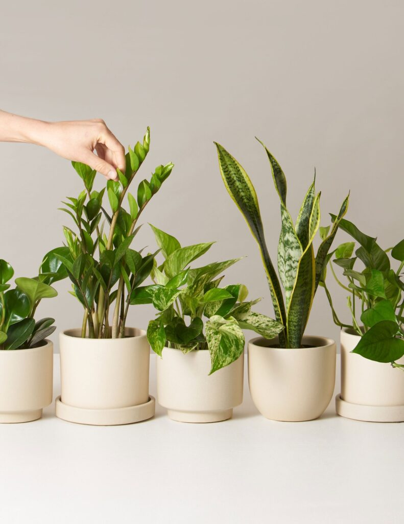 Plant subscription box from the sill.