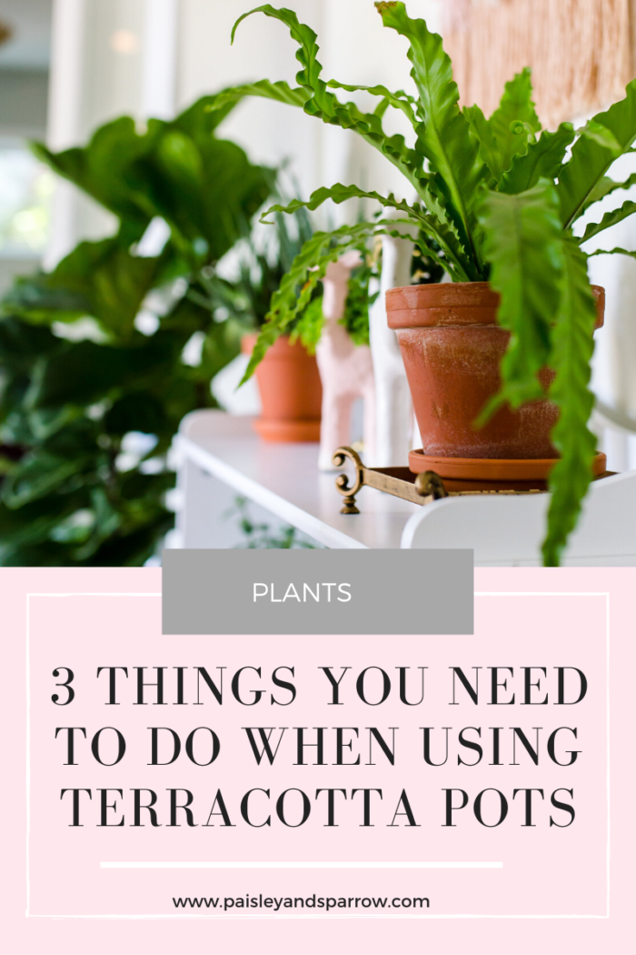 3 Things You Must Do When Using Terracotta Pots
