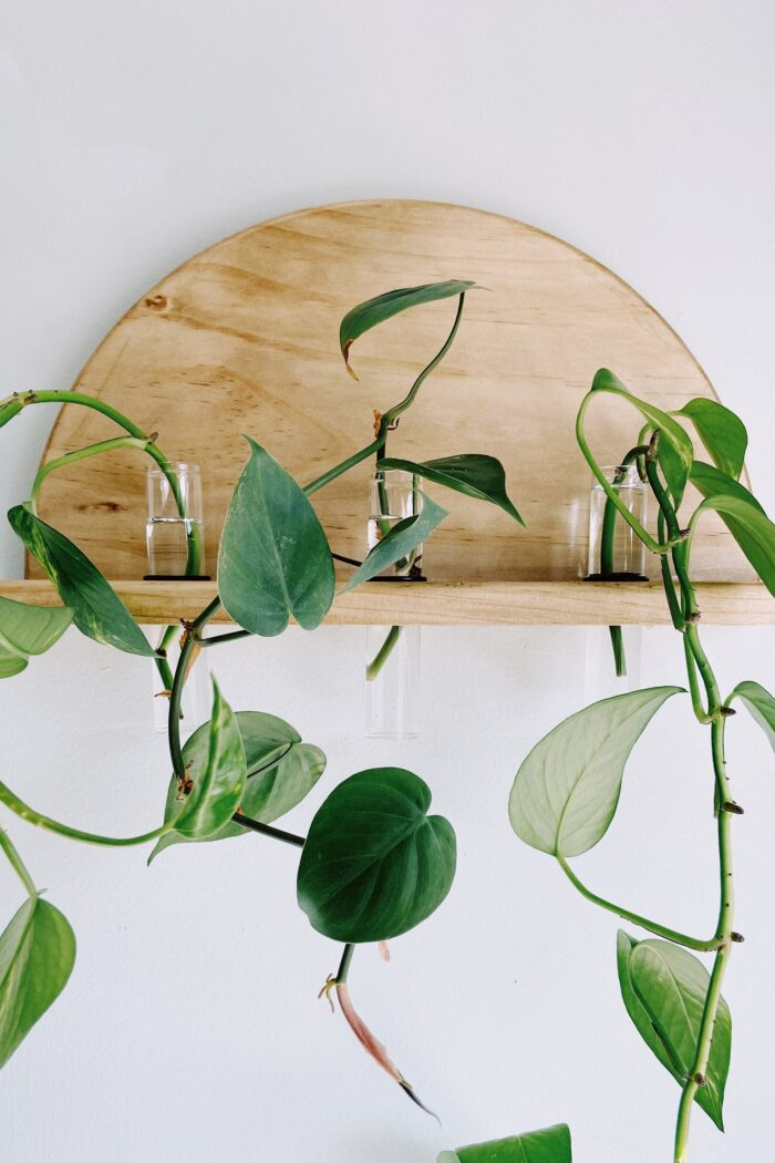 11 Plant Propagation Stations