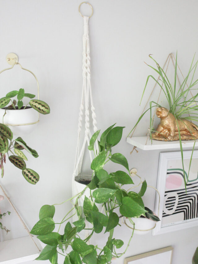 How to Make a Macrame Plant Hanger In 7 Simple Steps