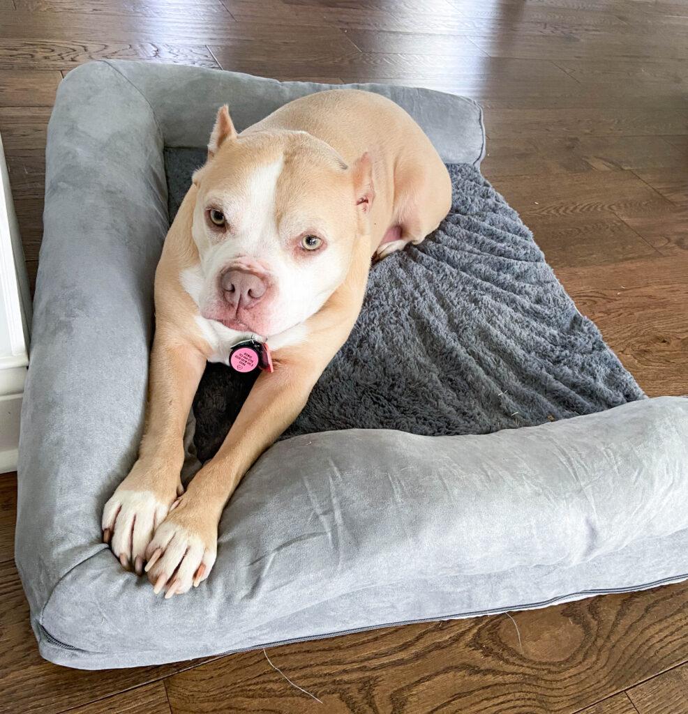 Amazon dog bed
