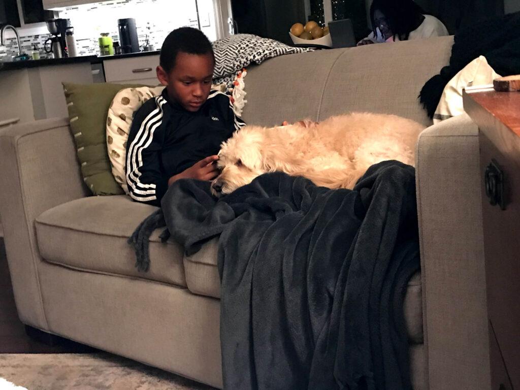 mini goldendoodle cuddling