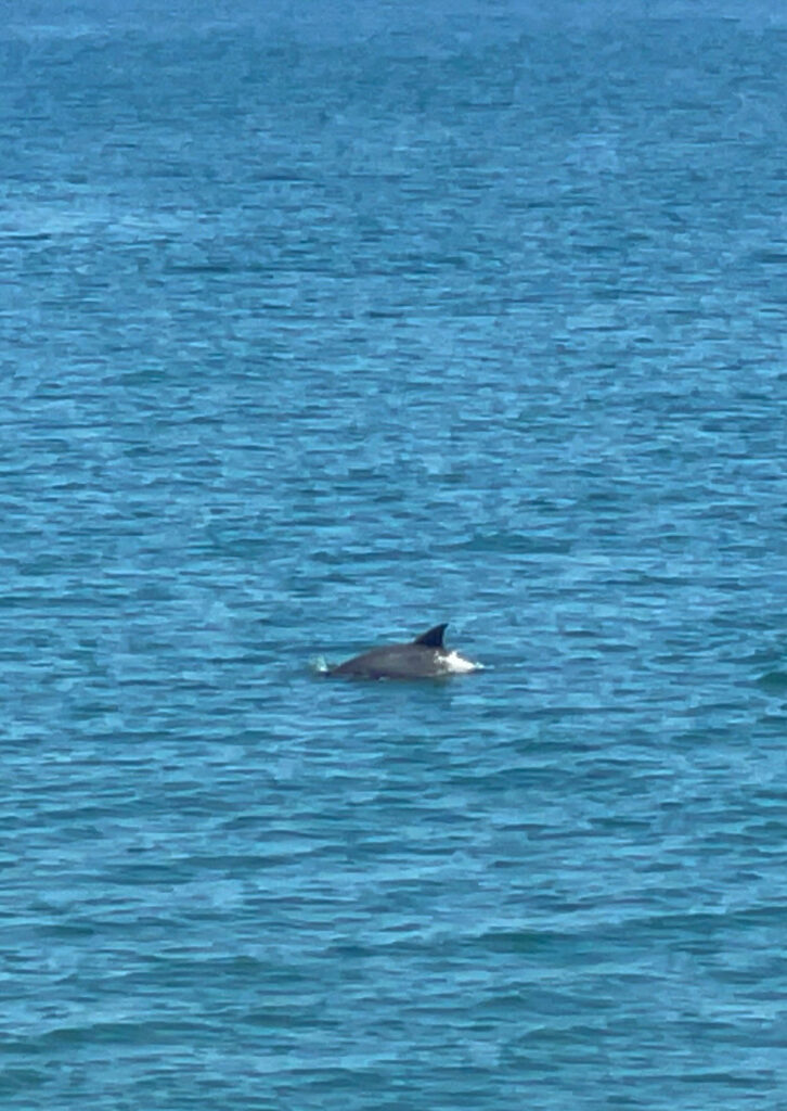 dolphins in nags head